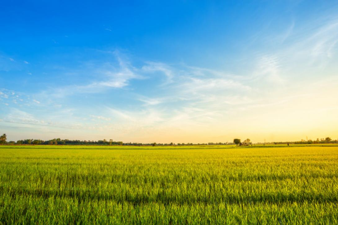 beautiful-green-cornfield-with-sunset-sky-background_29332-1154-1090px
